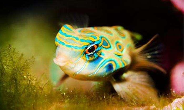 FishMart: $151 Off $275 Worth of Aquarium Supplies
