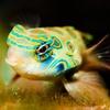 45% Off Aquarium Supplies
