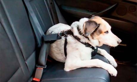 Arnés de coche para mascota con opción a kit de seguridad