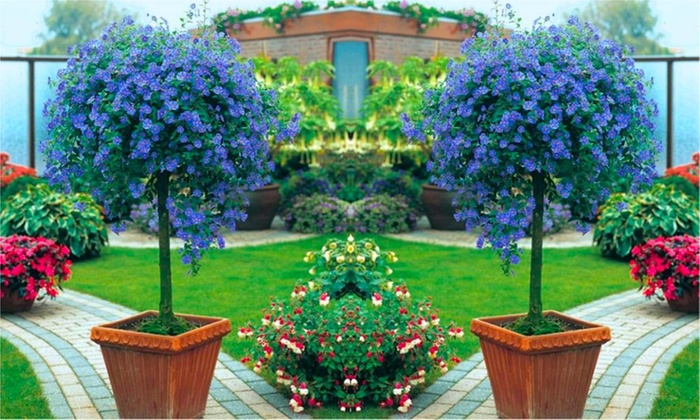 Three Exotic-Looking Patio Trees & Three Exotic-Looking Patio Trees | Groupon Goods