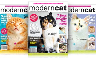 2-Year, 4-Issue Subscription to Modern Cat Magazine