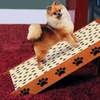 Pet Store Steps and Ramp Combo