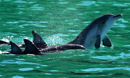 Port Stephens: One-Day Tour for One Adult or Child with Sand Boarding and Dolphin Watching Cruise with Ozia Tours