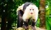Up to 36% Off Exotic Animals at Zoological Wildlife Foundation