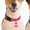 Up to 66% Off Monogram Online Custom Dog Tag and Collar