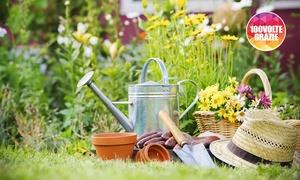 Luigi Pugliese: 3 o 6 ore di giardinaggio da GP Ristrutturazioni (sconto fino a 61%)
