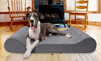 Furhaven Memory Foam Orthopedic Contoured Pet Lounger Dog Bed