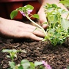 Half Off Plants and Garden Supplies