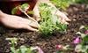 Dearness Gardens Nursery & Landscaping - Glenridge: $15 for $30 Worth of Plants and Garden Supplies at Dearness Gardens