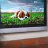 Up to 52% Off DOGTV