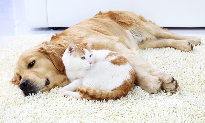 Pet Assure: One-Year Veterinary Discount Plan from Pet Assure (Up to 72% Off). Choose from Three Options.