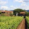 Degustazione di 4 calici di vino, Bolgheri