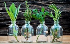 Formation conseiller en phytothérapie