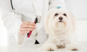 Jeremias: Revisión veterinaria con baño, arreglo y corte para perros desde 14,90 €