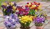 300 Spring Flowering Garden Bulbs