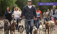 Weekend Dog Behaviour and Psychology Course with The UK Dog Whisperer (41% Off)