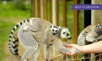 Tropical Butterfly House, Entry for Two or Four, 3 January - 17 February 2017 (Up to 53% Off)