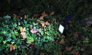 Water-Resistant Solar Lawn Light by SolarEK (48 LED)