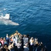 Up to 56% Off Whale-Watching Tour from H&M Landing