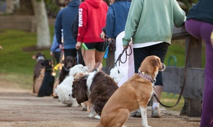 Thank Dog! Bootcamp: Introductory Dog Obedience Lesson with 4 or 8 Bootcamp Classes at Thank Dog! Bootcamp (Up to 75% Off)