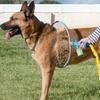 360° Duschring für Hunde