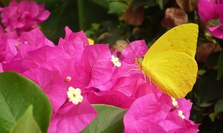 2 oder 4 Tageskarten für die Allgäuer Schmetterling-Erlebniswelt ab 9,50 € (bis zu 51% sparen*)