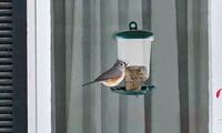 Pure Garden Window Bird Feeder photo