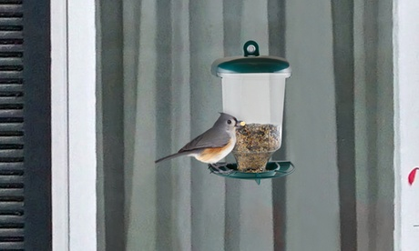 Pure Garden Window Bird Feeder (Goods For The Home Patio & Garden Bird Feeders & Food) photo