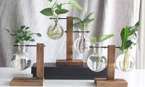 Vases de plantes hydroponiques de terrarium