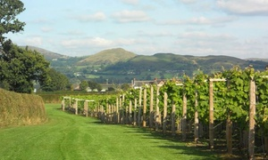 Kerry Vale Vineyard: Self Guided Vineyard Tour and Wine Tasting with Food for Up to 12 at Kerry Vale Vineyard