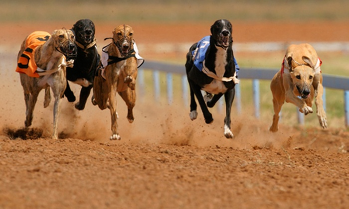 Drumbo Park - Lisburn: Entry For One, Two or Four to Dog Racing With Programme Plus Drink from £5 at Drumbo Park (63% Off)