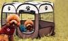 Boîte-tente pop-up pour animaux de 76x58 cm