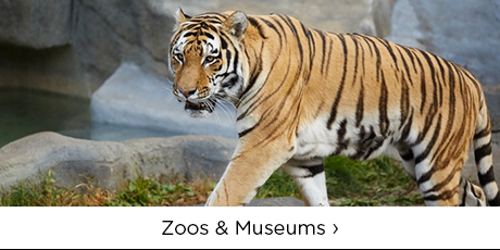 Zoos and Museums