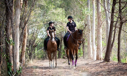 One $59 or Four $200 90Minute Sessions of Horse Riding at Cherbon Waters, Burbank Up to $540 Value