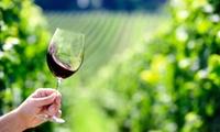 """1 carton de 6 bouteilles de vin rosé """"Légende de Famille"""" à emporter à 22,90 € au Domaine Bort"""