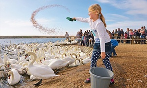 Abbotsbury Children's Farm, Swannery and Subtropical Gardens: Abbotsbury Children's Farm, Swannery and Subtropical Gardens: Child, Adult or Family Ticket (Up to 43% Off)