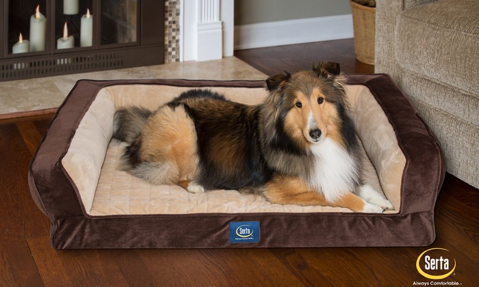 Fantastic Serta Ortho Foam Couch Style Bed For Pets Groupon Uwap Interior Chair Design Uwaporg