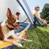 PetSafe Remote Dog Training Collars