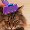 Pettine rimuovi peli per gatti