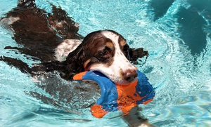 D.O.G. Fort Lauderdale: Two Days of Doggy Daycare at D.O.G. Fort Lauderdale (57% Off)