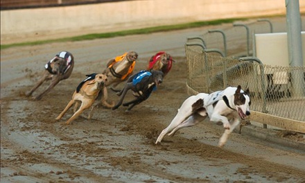 Greyhound Racing with Hot Dog and Drink at Yarmouth Stadium