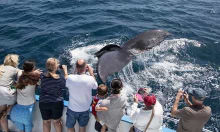 2.5 Hour Whale Watching and Dolphin Cruise from Davey's Locker (Up to 66% Off). Six Options Available.