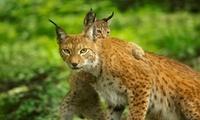 1 ticket Parc Animalier à 11,50 € au Domaine des Grottes de Han