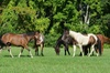 Sweet Meadow - Sherborn: Three Pony Rides, Exotic Animal Adventure, or Mini-Riders Mommy and Me Class at Sweet Meadow Farm (Half Off)