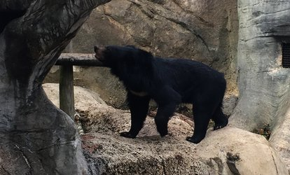 $12 for Admission for Two to The Jackson Zoo ($20.50 Value)
