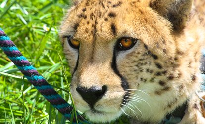 Cheetah Photo Group Encounters at Wildlife Safari (Up to 56% Off). Six Options Available.