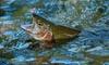Journée de pêche illimitée