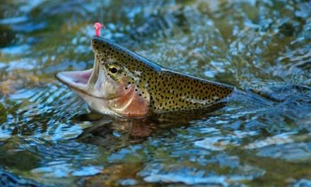 Journée de pêche illimitée pour 1 ou 2 personnes dès 21,90 € aux Étangs de la Palombière