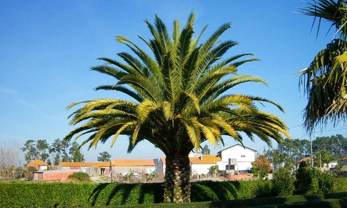 jusqu 39 61 palmiers des canaries groupon. Black Bedroom Furniture Sets. Home Design Ideas