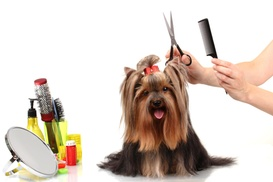 Cherry Valley Pet Grooming: $25 for $45 Worth of Services — Cherry Valley Pet Grooming